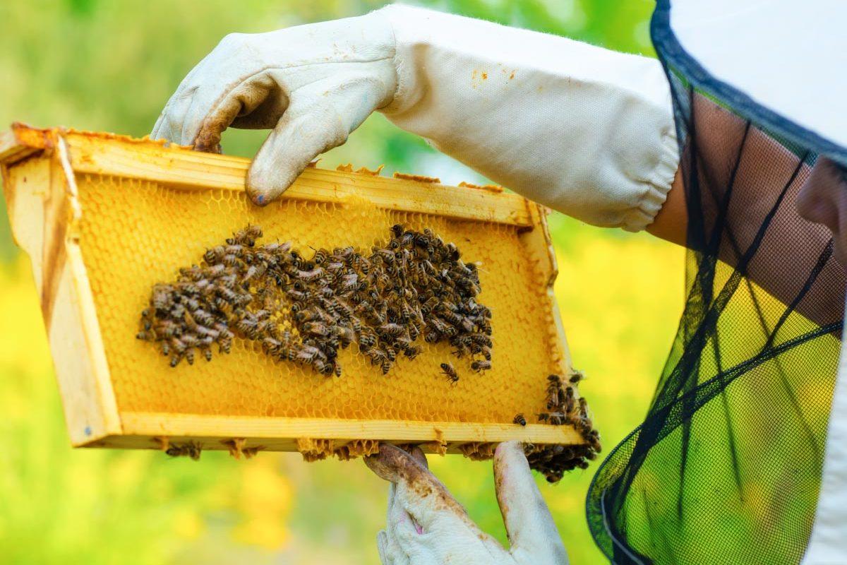 Boda-Méhészet-Miere-Naturala-Boda-Boda-Honey-miere-satu-mare-00-1200x800.jpg